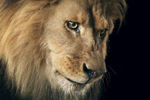 Foto:timflach.com. Imagen Por: