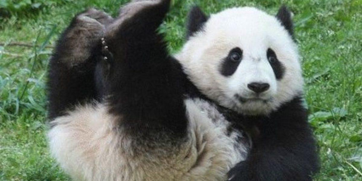 5 destinos en el mundo para hallar animales fascinantes