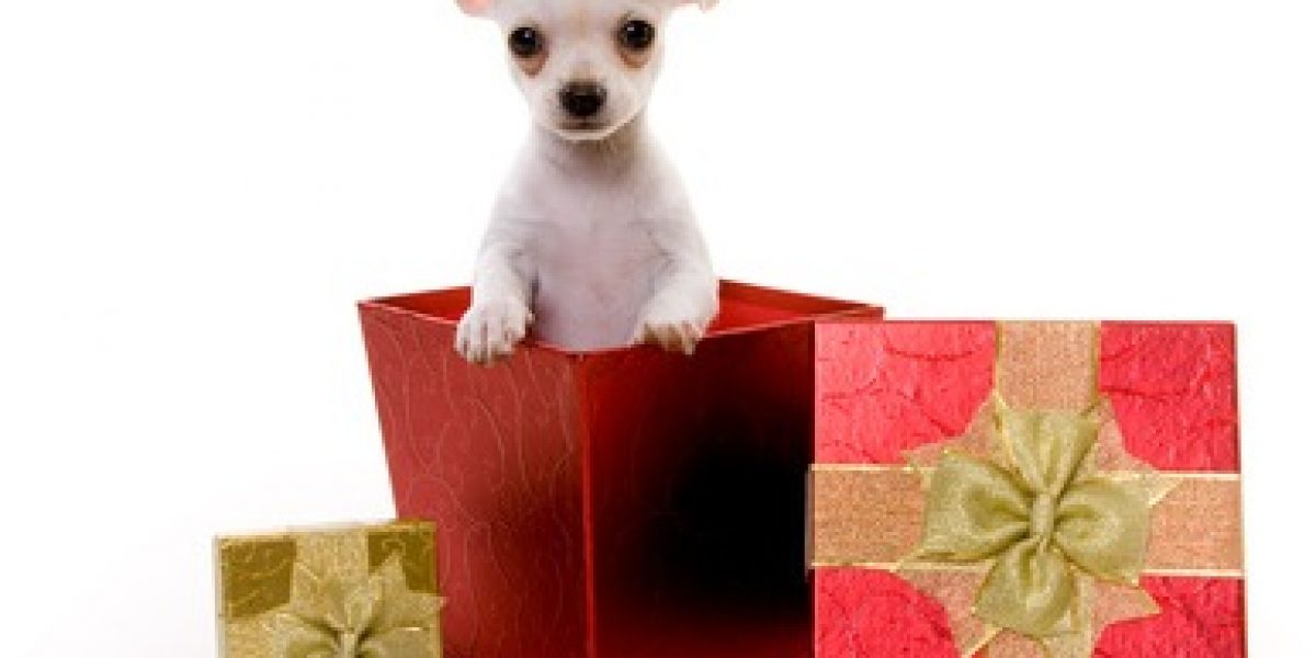 ¿Por qué regalar una mascota en esta navidad?