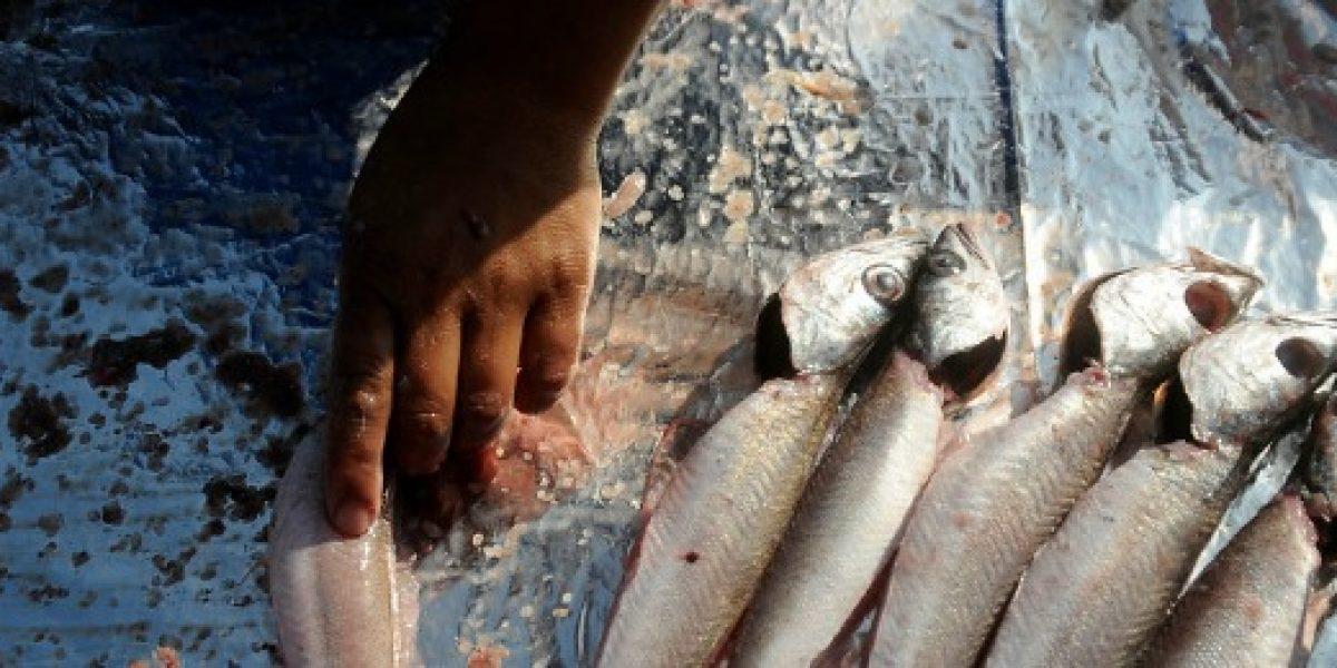 Subsecretario de Pesca firma protocolo para mejorar venta de pescados y mariscos en Ferias Libres