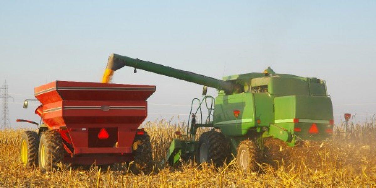 FAO: producción de cereales en A. Latina y Caribe crecerá 8,8 % en 2012