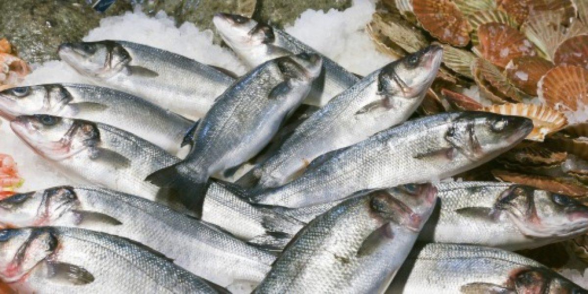 Ley de Pesca: Tribunal Constitucional acoge a trámite recurso de senadores