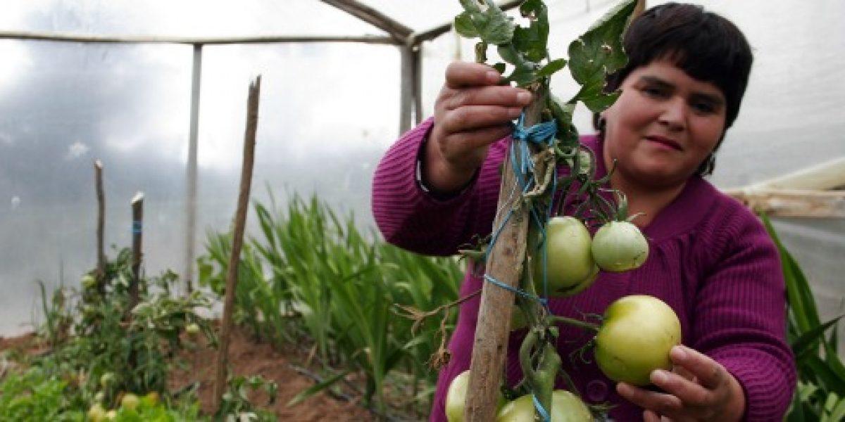 SNA valora decisión de poner urgencia al Proyecto de Estatuto Laboral Agrícola