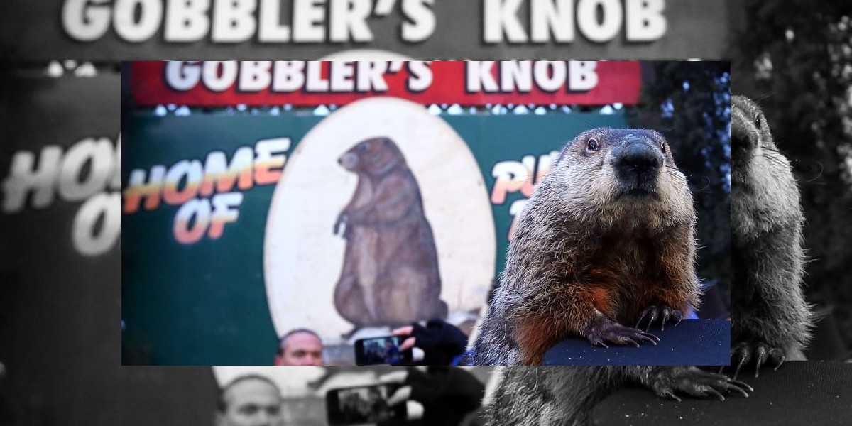 Famosa marmota Phil ya hizo su pronóstico para EE.UU.