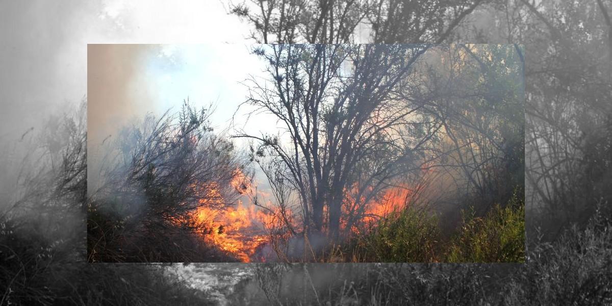 Alerta Roja en Algarrobo por incendio forestal
