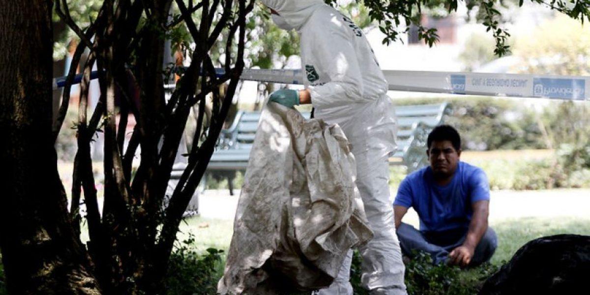 [FOTOS] Horror en Providencia: Perro encuentra un feto enterrado junto a un árbol