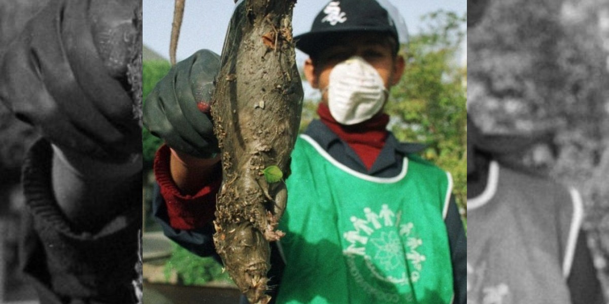 Irán combatirá plaga de ratas