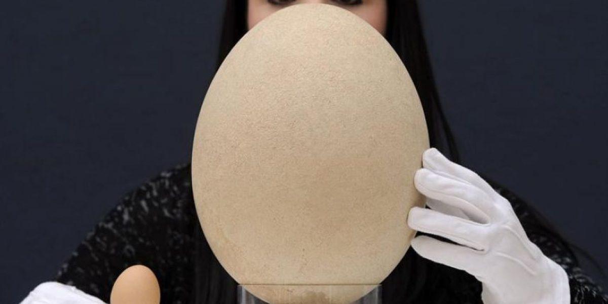 [FOTOS] Subastan milenario huevo del ave más grande que ha existido