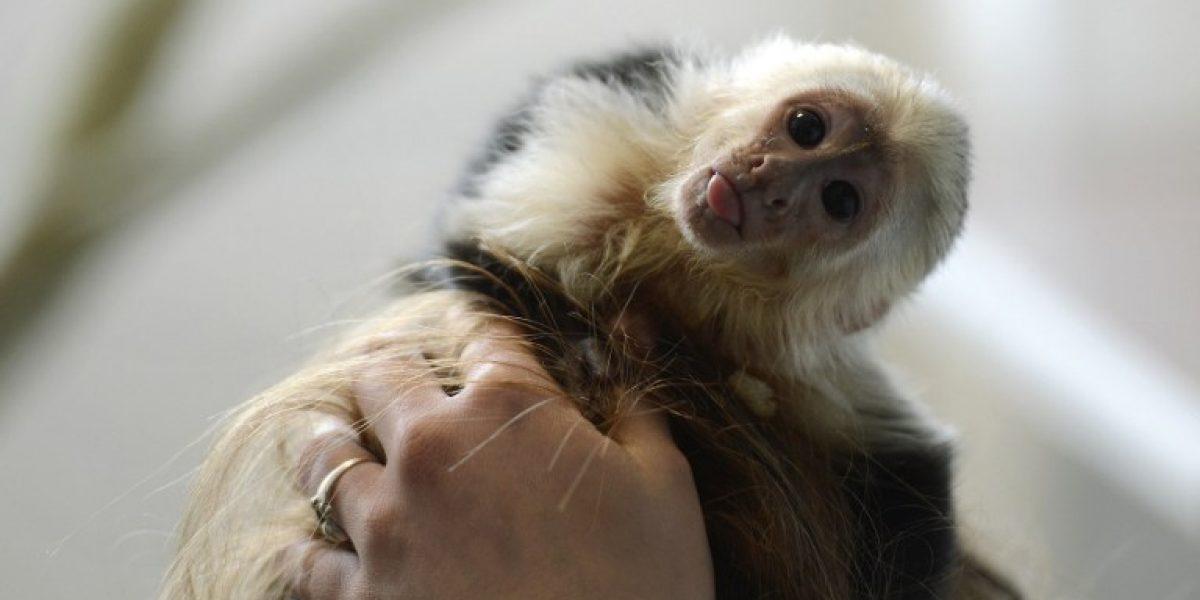 Dan cuatro semanas a Justin Bieber para recuperar a mono que dejó en Alemania