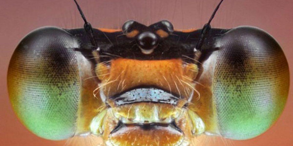 [FOTOS] Logran increíbles imágenes de insectos en primer plano