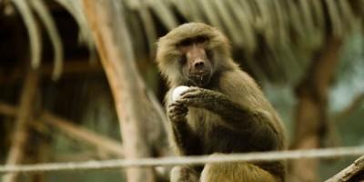 Tragedia en zoológico de Quilpué: Niño de dos años es atacado por un mono