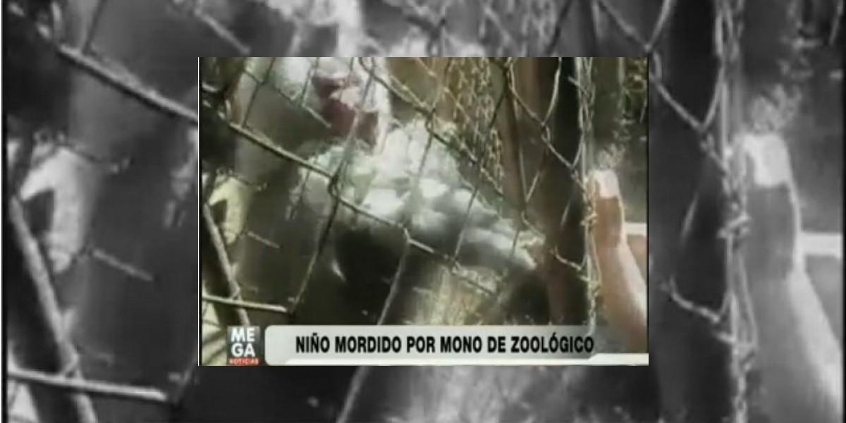 Impactantes imágenes del ataque de mono a niño en zoológico de Quilpué