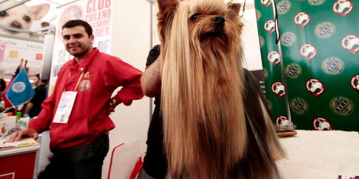 [GALERÍA] Así se vivió la Expo Mascotas este fin de semana