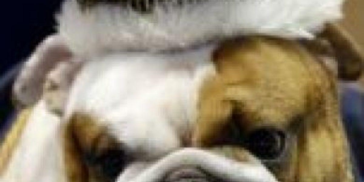 [FOTOS] Este perro fue coronado como