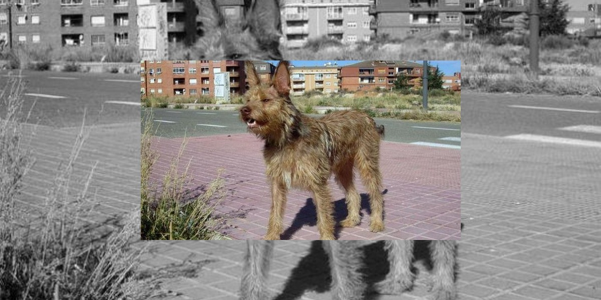 Exigen pensión vitalicia para un perro víctima de mal trato en España