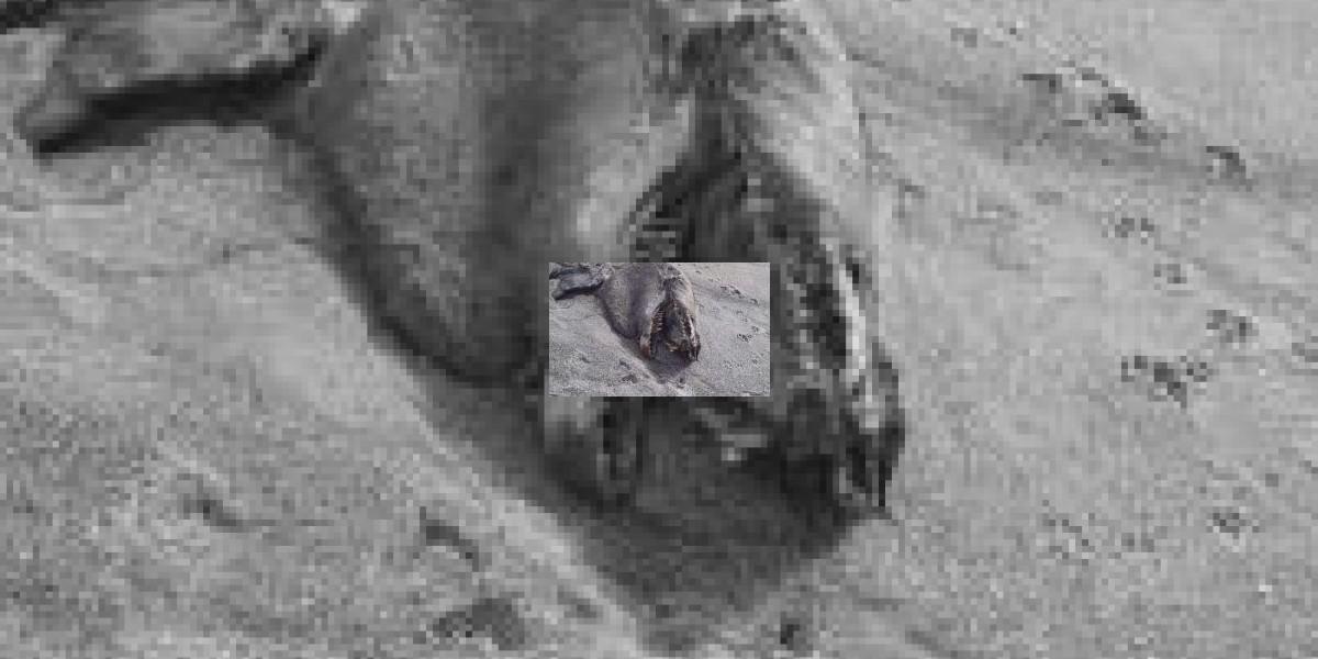 Cadáver de misterioso monstruo marino en Nueva Zelanda intriga a expertos