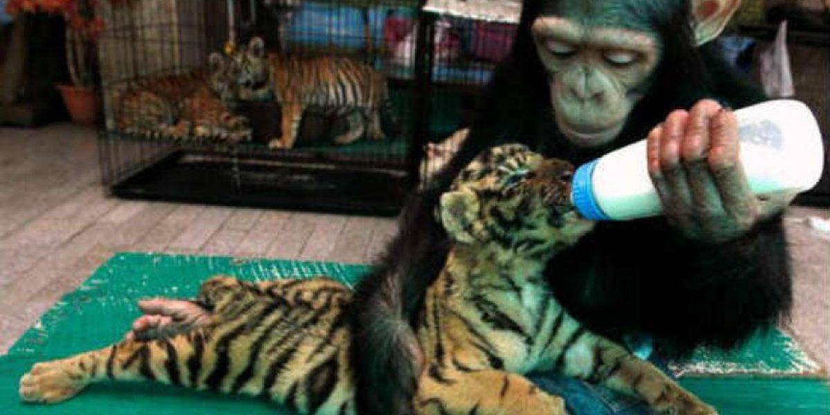 FOTOS: La maternidad también se vive en el reino animal