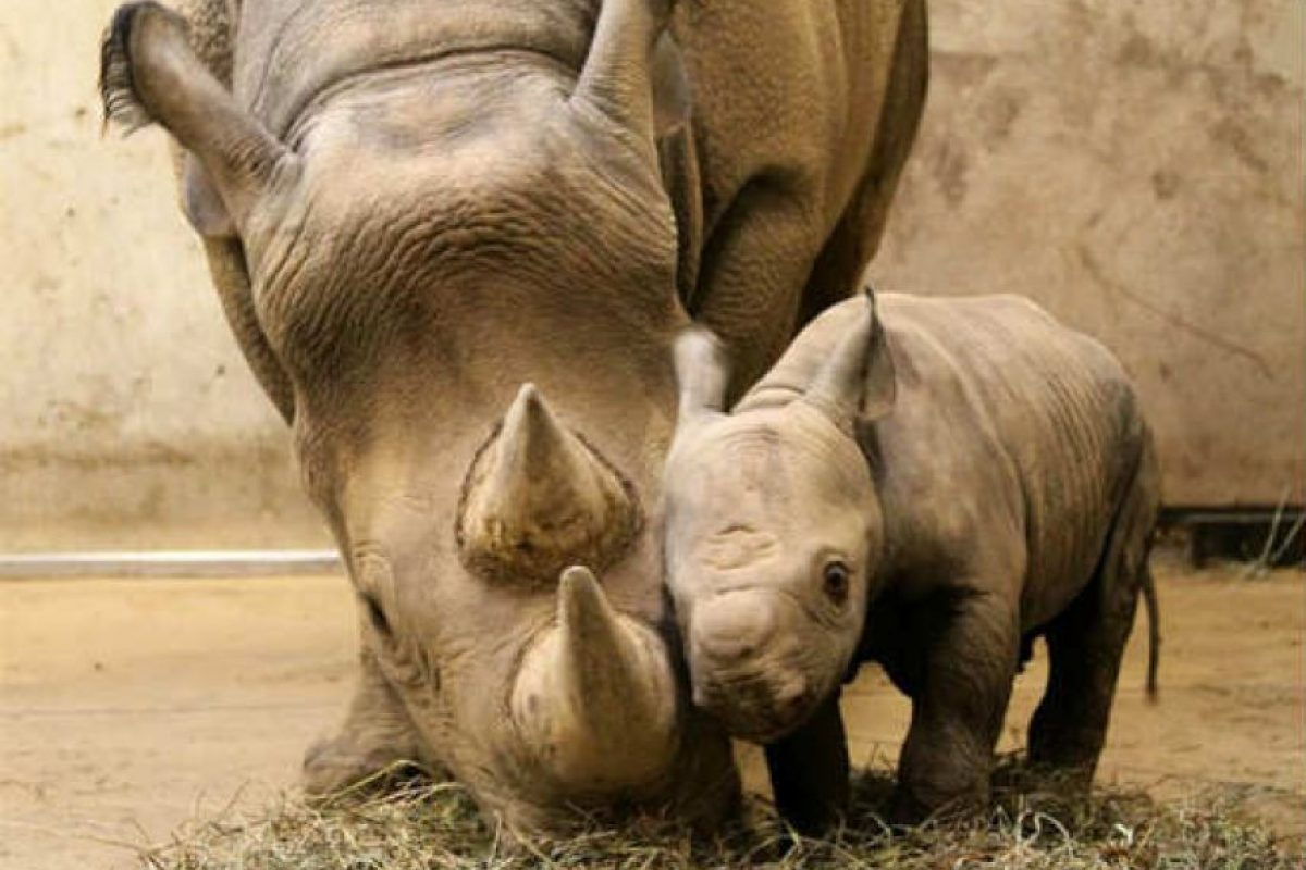 En el reino animal también regalonean a las mamás Foto:lapatilla.com. Imagen Por: