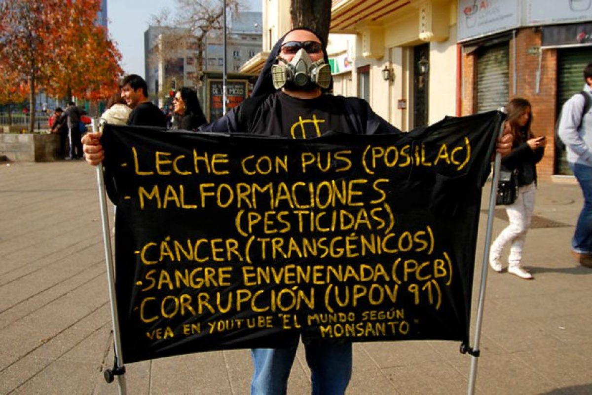 Cientos de manifestantes se congregaron hoy para realizar una marcha pacífica en contra de los cultivos de organismos modificados genéticamente (OGM), conocidos como transgénicos. Foto:Agencia Uno. Imagen Por: