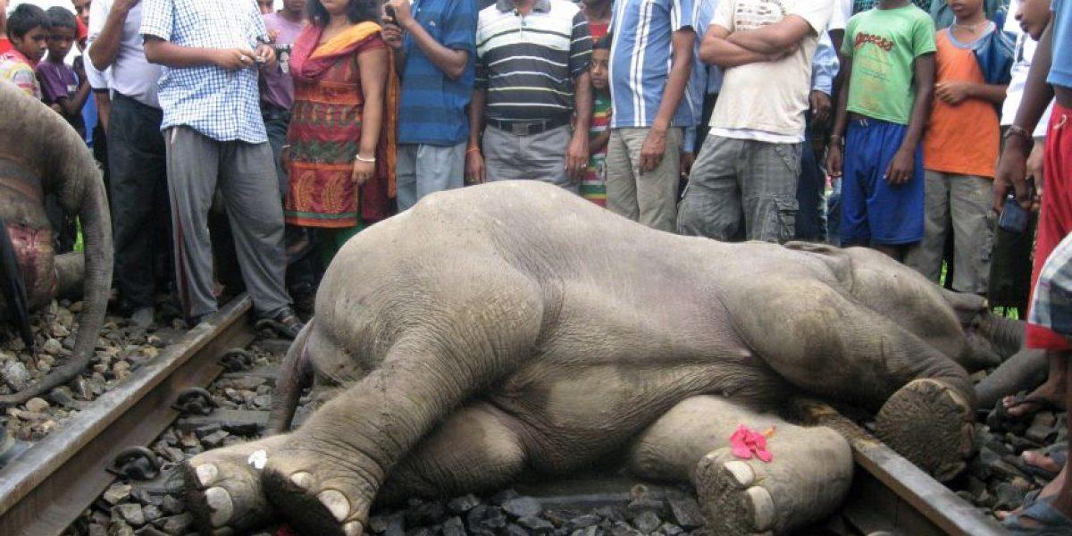 Tren en la India mata a cuatro elefantes que cruzaban por la vía