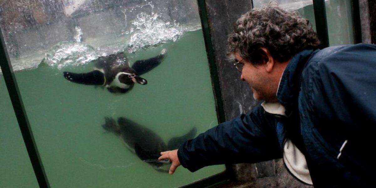 [FOTOS] Estos bellos animales esperan a los niños en el Zoológico Metropolitano