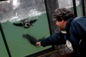 El Zoológico Metropolitano de Santiago abrió sus puertas al público en la inauguración de la temporada de vacaciones de invierno. Foto:Agencia Uno. Imagen Por: