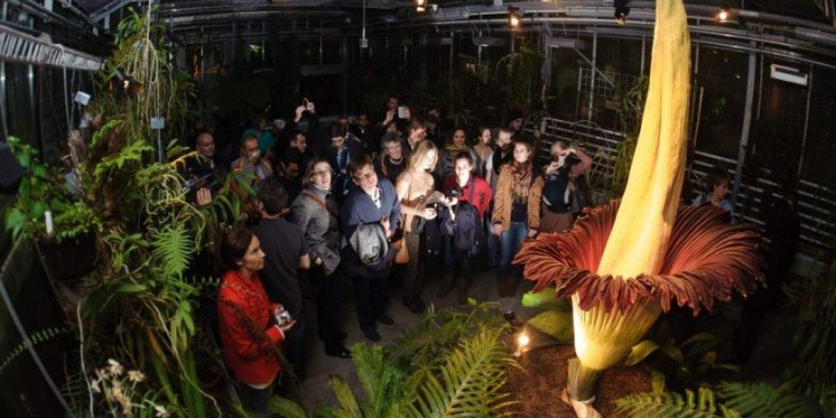 FOTOS: La mayor flor del mundo florece en Bruselas