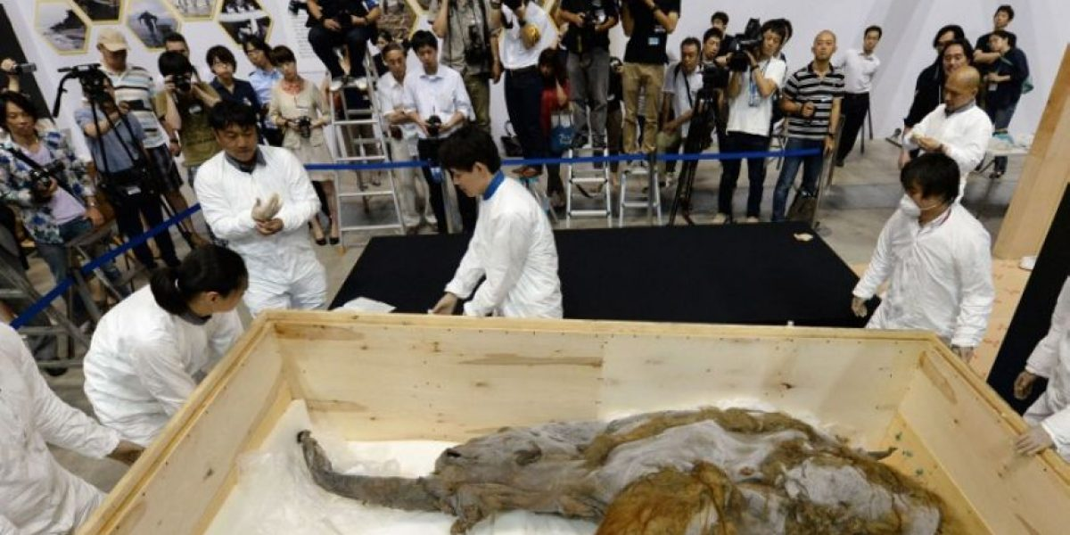 Fotos: Exhiben el mamut hallado en mejor estado de preservación