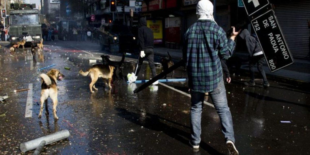 Perros callejeros: los otros manifestantes de Chile