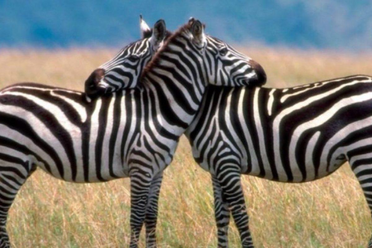 George de la Selva: Esta historia es en el Serengeti y sucedió en marzo. Una mujer africana decidió tener sexo con su socio en los arbustos, precisamente cerca de un león. Este, ni corto ni perezoso, atacó y la mató Foto:Publimetro México. Imagen Por: