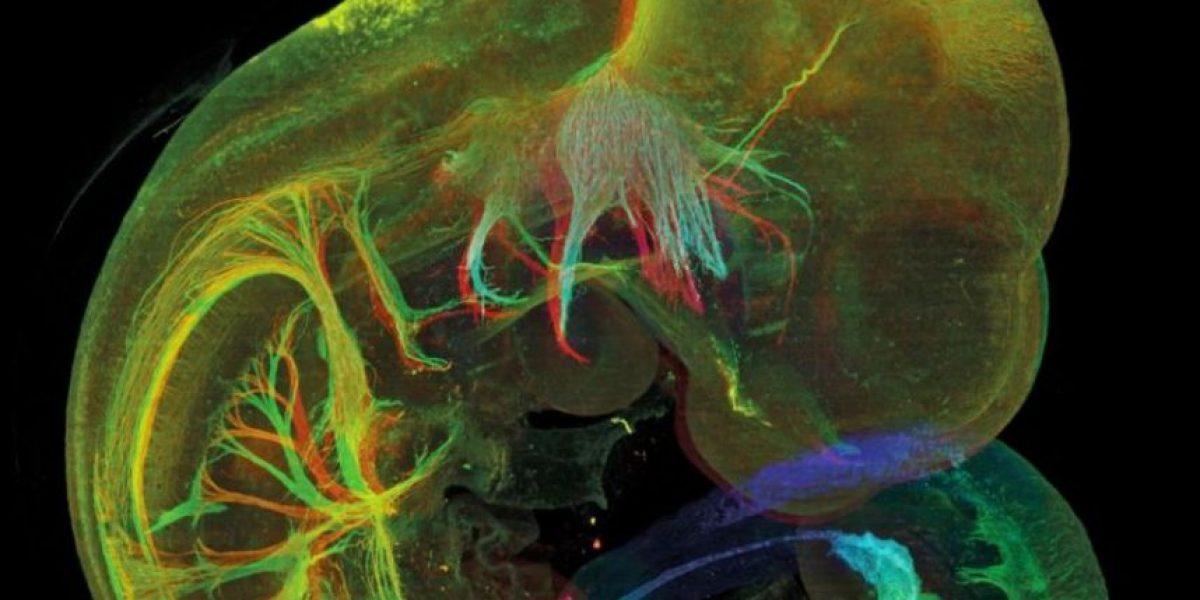 Galería: Las mejores fotos científicas del año