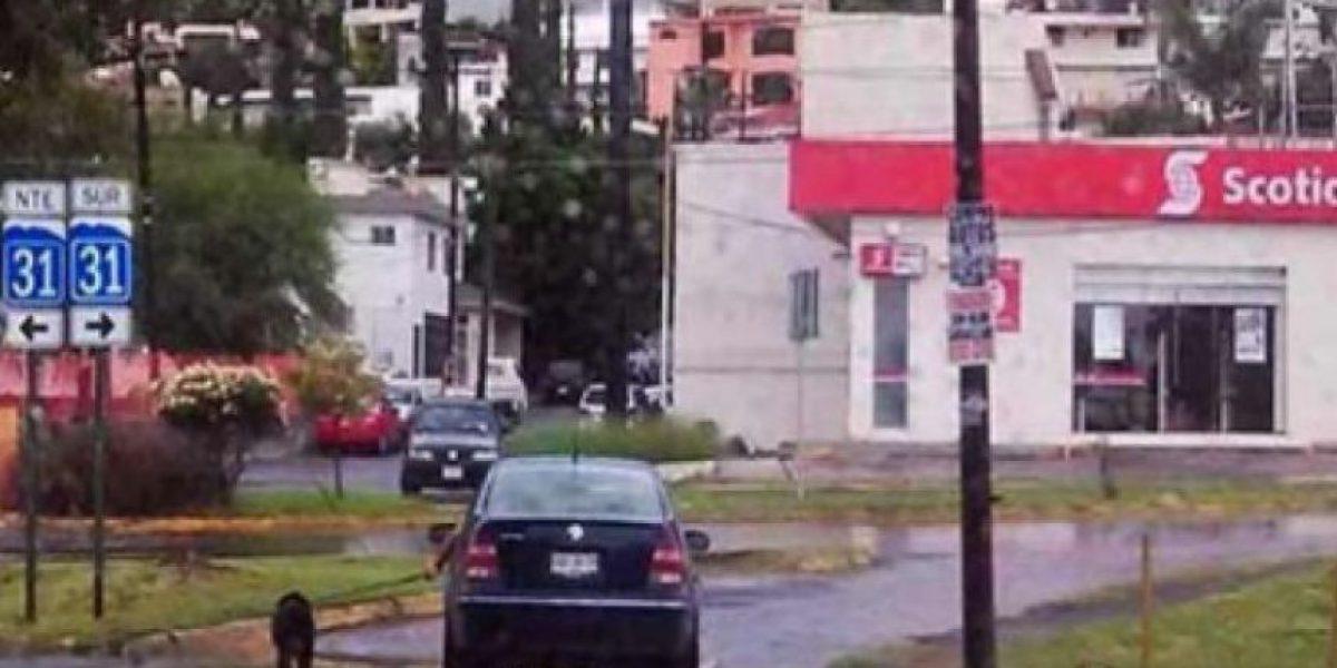 FOTOS: Sujeto pasea a perro desde su auto y lo atropella