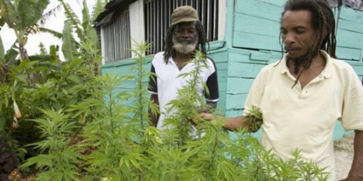 Ofrecen tours de marihuana en Jamaica