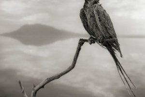 """""""Encontré las criaturas de forma inesperada –toda clase de pájaros y murciélagos– arrastrados por el agua a lo largo de la costa del Lago Natrón"""", cuenta el fotógrafo Nick Brandt, en su libro Across de Ravaged Land (a través de la tierra desolada) sobre animales africanos.. Imagen Por:"""