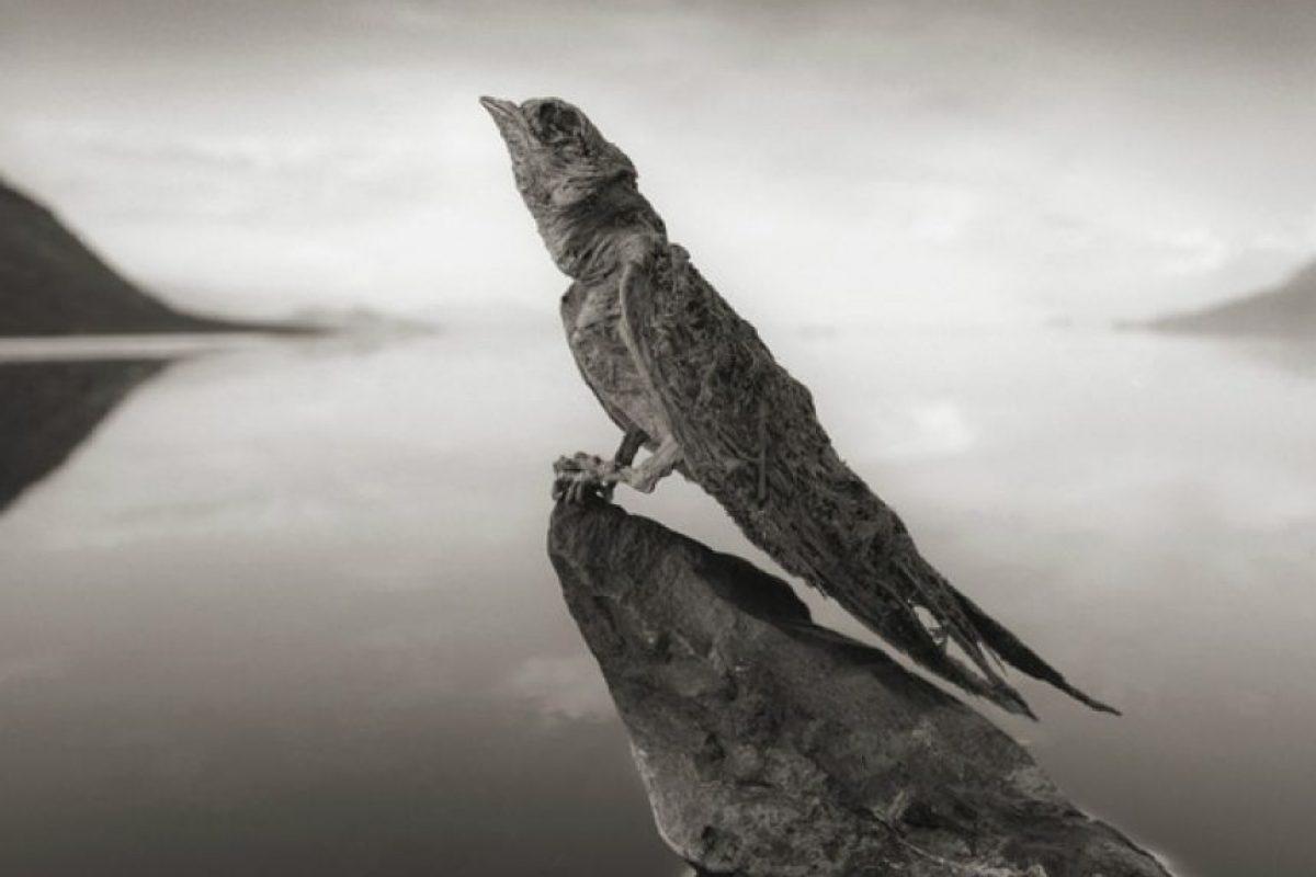 """""""Nadie sabe con certeza cómo murieron, pero parece que la naturaleza extremadamente reflectante de la superficie del agua confunde a los animales, y caen al lago como pájaros que se chocan contra el vidrio de una ventana"""", explica el fotógrafo.. Imagen Por:"""