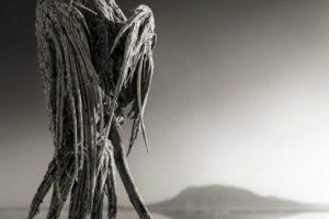 Un lago mortal que convierte animales en estatuas de sal. Parece la trama de un relato fantástico y siniestro, pero eso es lo que ocurre en el Lago Natrón, en el norte de Tanzania, África. El lugar toma su nombre de un compuesto químico natural formado principalmente por carbonato de sodio, proveniente de cenizas del cercano volcán Ol Doinyo Lengai.. Imagen Por: