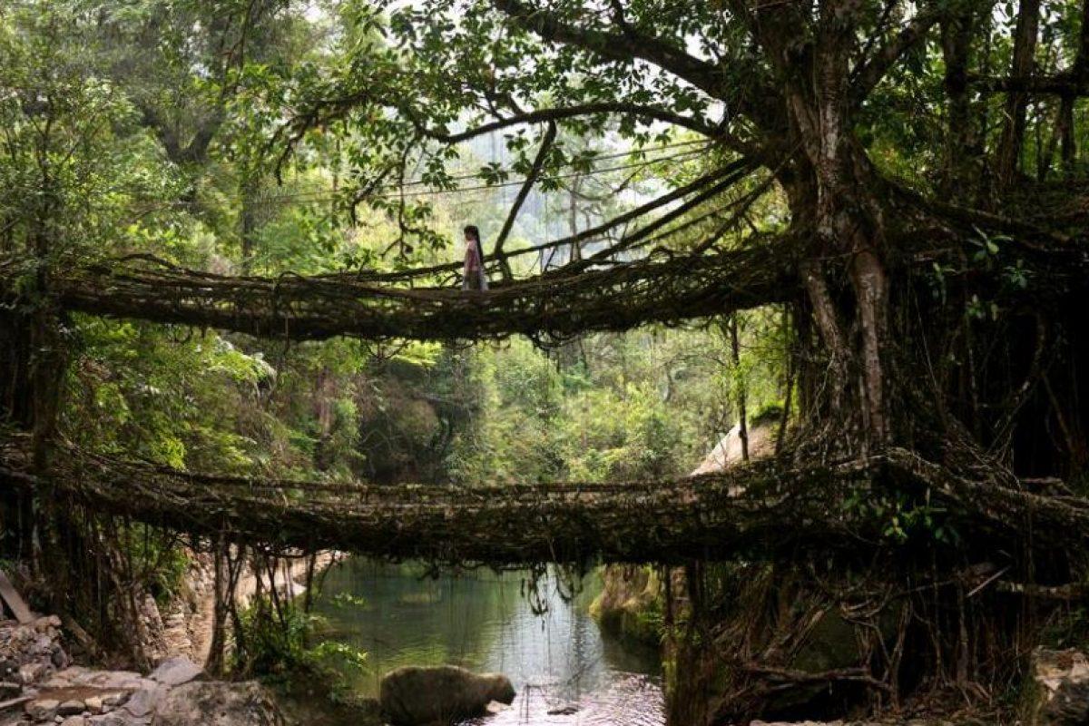 Puente en el pueblo de Cherrapunki, estado de Meghalaya, India, hecho de raíces de árbol. Foto:BBC. Imagen Por: