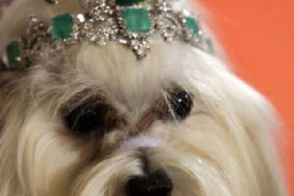 Con 4,2 millones de dólares se puede alimentar cerca de 7.000 niños de Etiopia por un año o también comprarle esta tiara de esmeraldas y diamantes a su perro. Foto: Luxuo.com. Imagen Por: