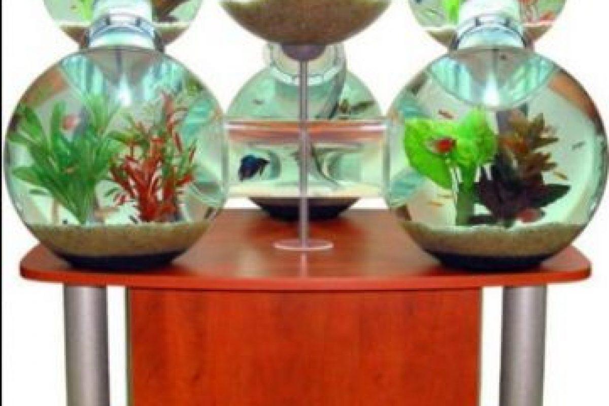 Los peces también son consentidos. Este acuario cuesta 6.500 millones de dólares. Foto: The Daily Beast.. Imagen Por: