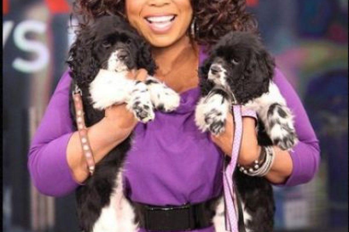 Los perros de Oprah Winfrey cuestan 40 millones de dólares cada uno, además están asegurados por salud por 2.5 millones de dólares. Foto: IMG2.. Imagen Por: