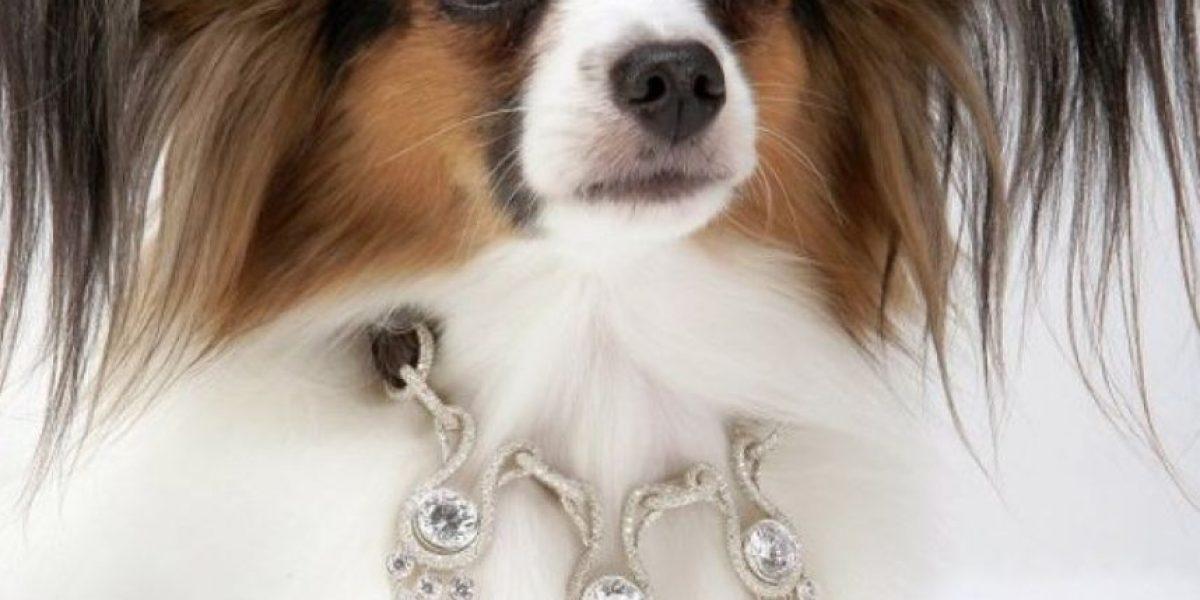 FOTOS: Excéntricos regalos para sus mascotas