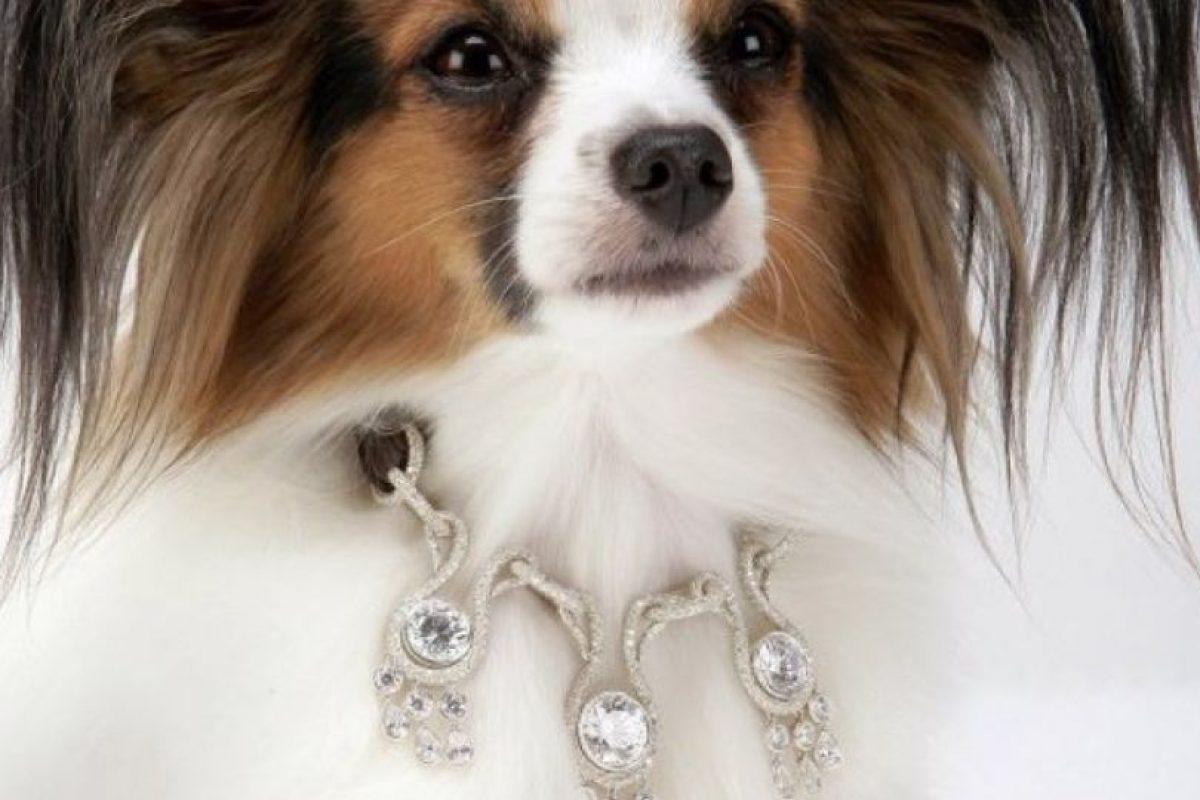 El collar Amour Amour con 7 diamantes, si se quiere dorado o plateado, cuesta 3,2 millones de dólares para su perro. Foto: The Daily Beast.. Imagen Por: