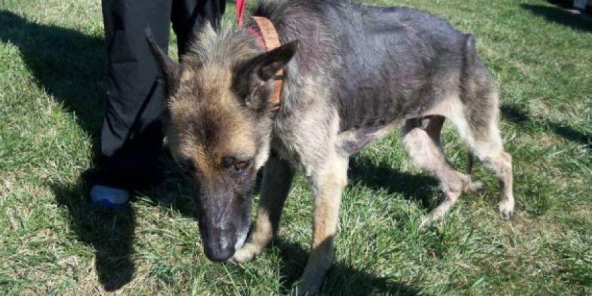 Cruel historia: Perro pasó cuatro años atado a un árbol