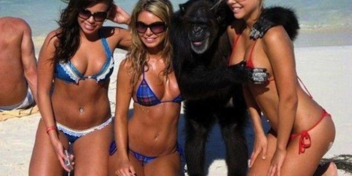 Galería: 11 monos traviesos y su gusto por las