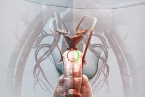 Foto:Tobaccobody.fi. Imagen Por: