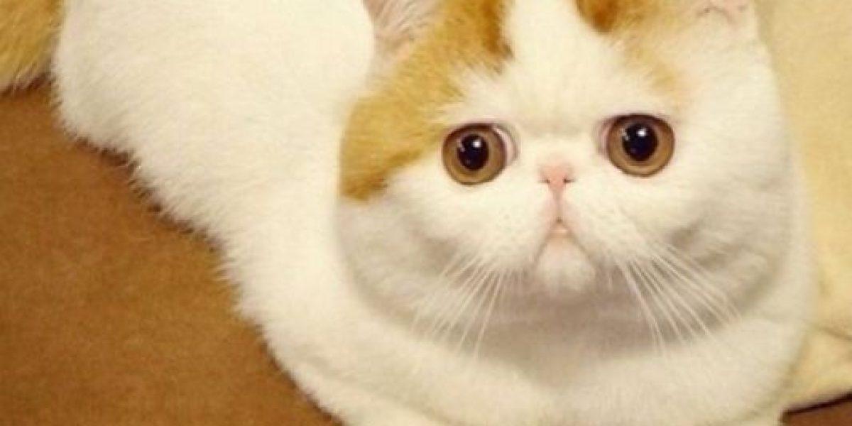 FOTOS: El gatito más lindo del mundo