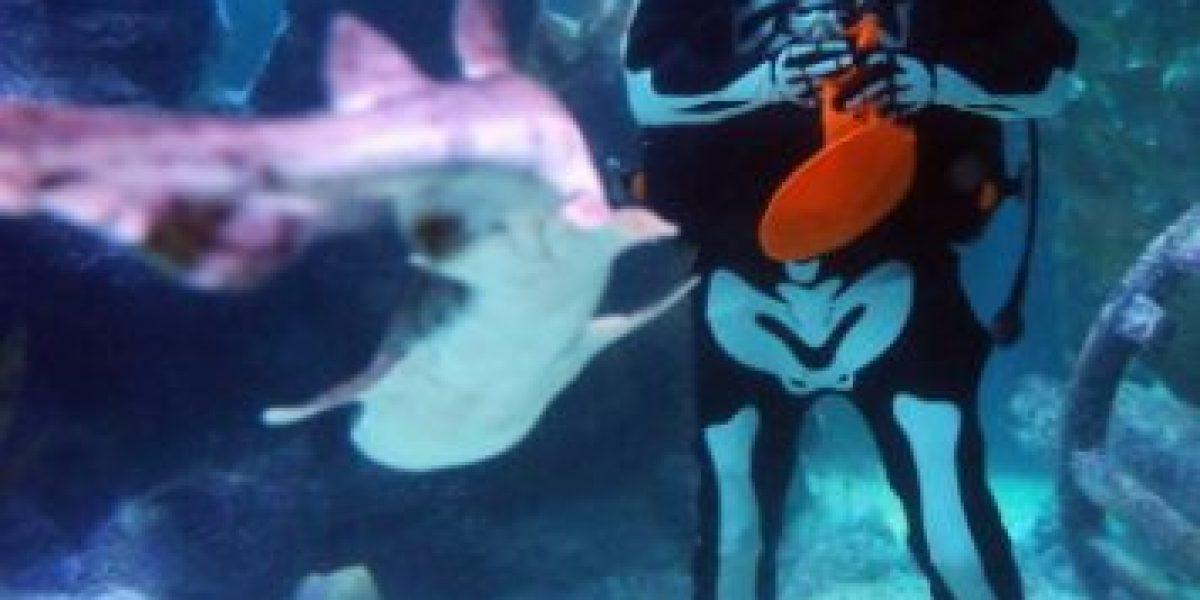 [Fotos] Los animales marinos también celebran Halloween en Alemania