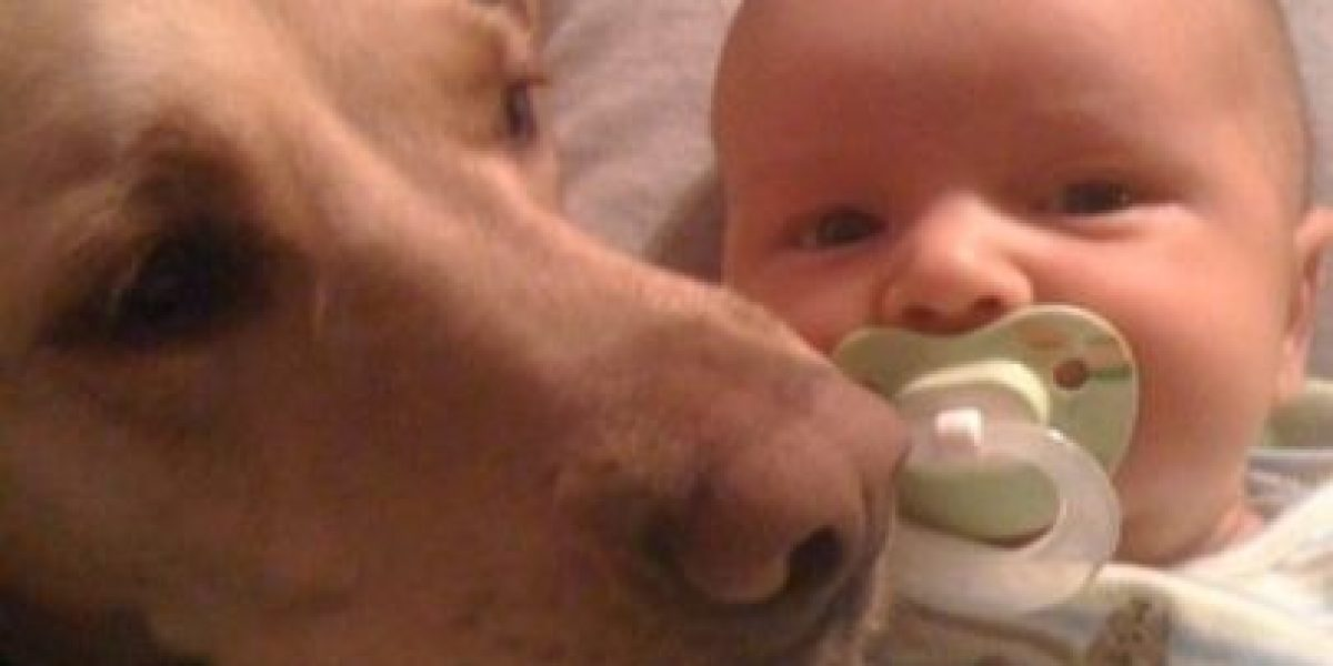 Galería: Este niño va creciendo y su perro sigue fiel junto a él