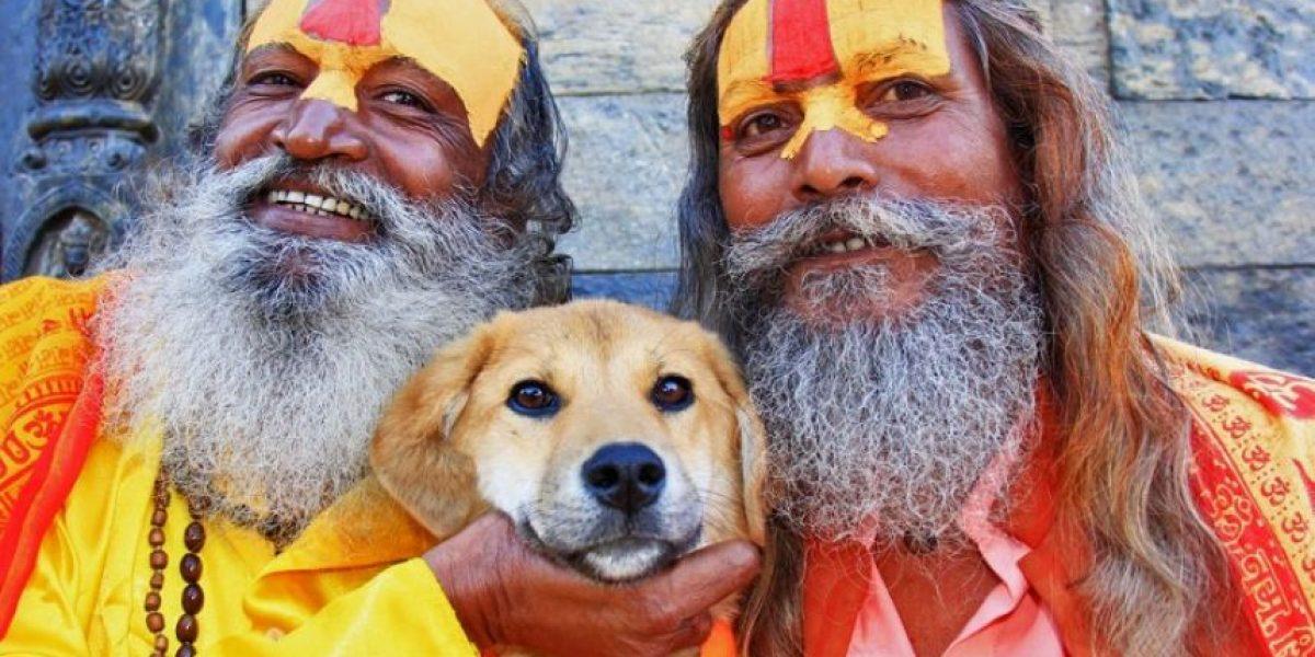 Este perro recogido de un basurero fue protagonista de un logro histórico