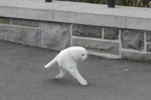 Insólito gato con dos patas Foto:@VistoEnMaps. Imagen Por: